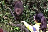 ये बंदर तो कुछ ज्यादा ही शातिर निकला, खाना खाया और फिर...