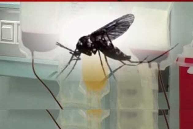 दिल्ली-एनसीआर में डेंगू मरीजों की संक्या 900 के पार