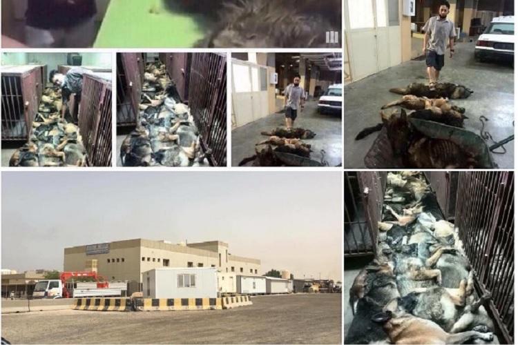कुवैत की गली में मिले दर्जनों अमेरिकी कुत्तों के शव, एक इंस्टाग्राम पोस्ट से दुनिया में मची सनसनी!