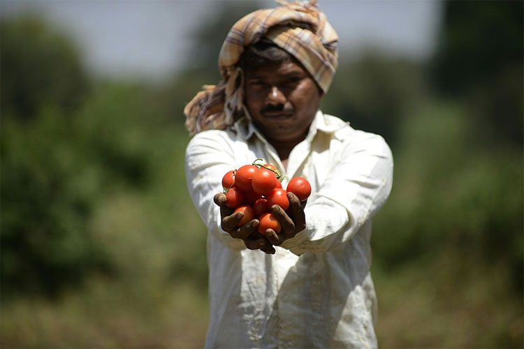 मध्य प्रदेश के किसानों ने पाकिस्तान के खाने का जायका बिगाड़ा