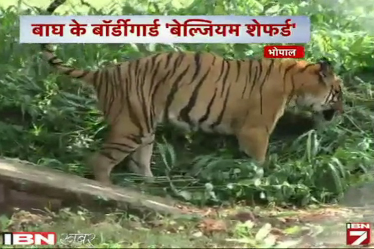 मध्य प्रदेश में अब बाघों की सुरक्षा करेंगे कुत्ते!