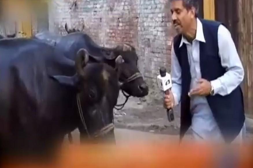 Pakreportor1_news18india_050317