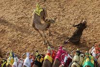 ऊंट दौड़ का रोमांच देखना हो तो देखिए दुबई का ये 'कैमल फेस्टिवल'