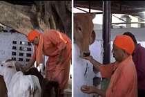 सीएम योगी की एक आहट से दौड़ी चली आईं गोशाला की गायें