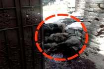बुरहान वानी के बाद कश्मीर के नए पोस्टर ब्वॉय सबज़ार भट को सेना ने मार गिराया
