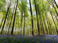 जंगल बीहड़ भी होते हैं और उतने ही रहस्यमयी. आइए आपको बताते हैं दुनिया के कुछ ऐसे जंगल जो खतरनाक तो हैं ही बल्कि वे आज भी दुनिया के लिए रहस्य बनें हुए हैं.