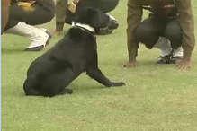 सीआरपीएफ ने खोया अपना ये जांबाज कुत्ता, याद में बन रहा मेमोरियल