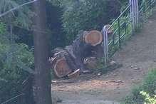 हिमाचल में वन माफिया के हौसले बुलंद, तीन माह में अवैध पेड़ कटाई के 451 मामले दर्ज