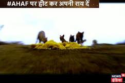 आधी हकीकत आधा फसाना: यहां खूंखार जानवर लगाते हैं मंदिर के प्रसाद का भोग