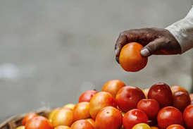 नोटबंदी से कर्ज में डूबे किसान, 80 पैसे प्रति किलो हुए टमाटर के दाम