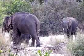 VIDEO : उत्तर भारत में कितने हैं हाथी, गणना शुरू