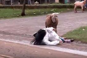 देखें: जब बकरे को आया गुस्सा तो उसने किसी को नहीं बख्शा!