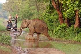 जंगल का असली रोमांच चाहिए तो जाइए जिम कार्बेट, तस्वीरों में देखें