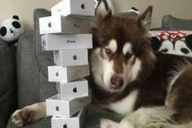 गजब शौक...कुत्ते के लिए ही खरीद डाले आठ 'आईफोन 7'