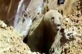 खुदाई के दौरान जमीन से अचानक निकल आया जिंदा भालू और फिर..