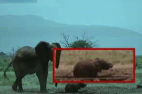 देखें: नन्हें हाथी को बचाने के लिए बेचैन हुई मां, फिर...
