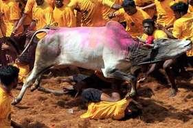 जल्लीकट्टू के समर्थक तो राजा राममोहन राय को भी फांसी पर लटका दें?
