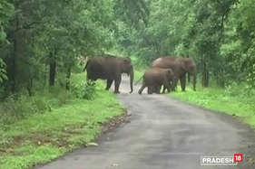 रायगढ़ के जंगलों में ना तो लोग सुरक्षित हैं और ना ही जानवर