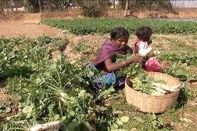 सब्जियों की गिरी कीमतों ने बढ़ायी किसानों की मुश्किलें, लागत वसूली पर भी आफत