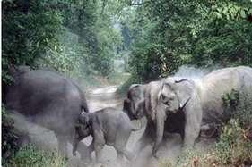 गाय ही नहीं हाथी, बाघ और बंदर के पेट में भी पॉलीथिन!