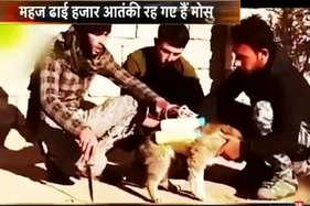 देखें: मासूम जानवरों को आईएसआईएस बना रहा मौत का हथियार
