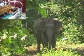हाथी की आंखों में धूल झोंककर धीरा ने बचाई जान, वन विभाग बनाएगा डॉक्यूमेंट्री