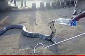 वीडियो : जब सांप ने पिया बोतल से पानी