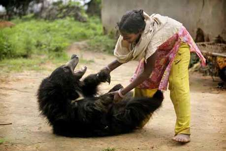 <a  href='http://khabar.ibnlive.in.com/photogallery/3711/'><font color=red>देखें: एक लड़की और खतरनाक भालू की दोस्ती!</font></a>