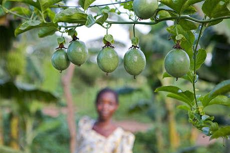 जैविक खेती ने बदली किसान की तकदीर, 20 हजार से 13 लाख रुपये हुई कमाई!