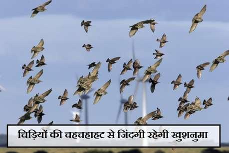 रोज सुनेंगे चिड़ियों की चहचहाहट तो जिंदगी रहेगी खुशनुमा