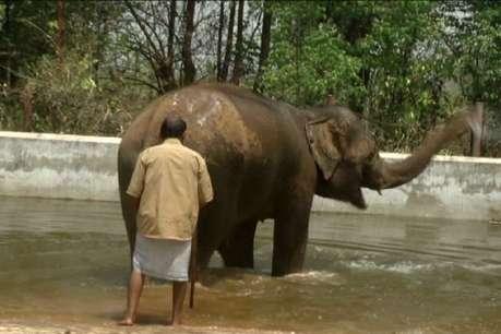 चीता-शेर पीते ग्लूकोज, दो बार नहाते हैं गजराज