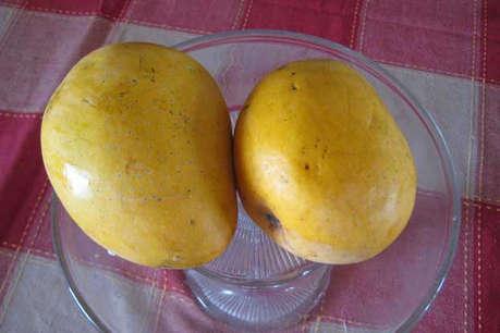 खतरे में है आमों की मल्लिका 'नूरजहां', एक-एक फल की होती है प्री-बुकिंग