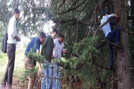 फॉरेस्ट गार्ड की मौत : उसी पेड़ पर चढ़ी सीआईडी, जहां लटका था होशियार का शव