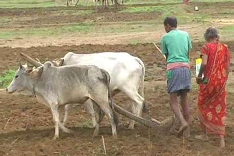 जिले के 80 प्रतिशत किसान आज भी बारिश पर निर्भर