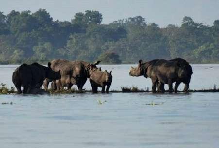 पानी में डूबा काजीरंगा नेशनल पार्क, यहां के गैंडों को बचाना बड़ी चुनौती