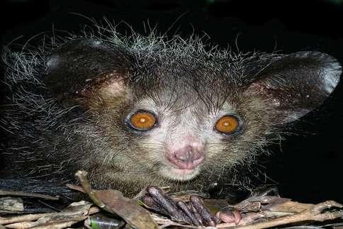 क्या कभी देखे हैं ऐसे अजीब जीव?