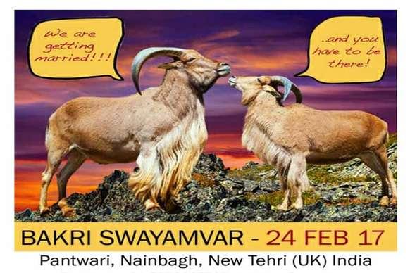 प्रियंका, कटरीना और दीपिका बनेंगी दुल्हन! महाशिवरात्रि के दिन होगा बकरी स्वयंवर