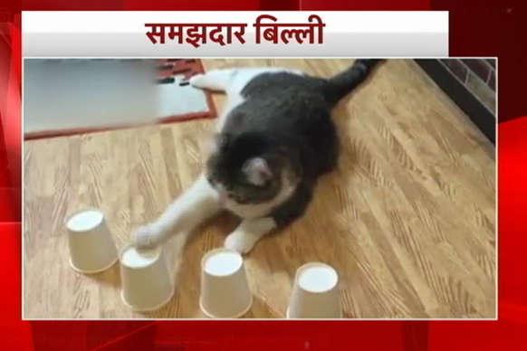 देखिए समझदार बिल्ली का ये दिलचस्प खेल