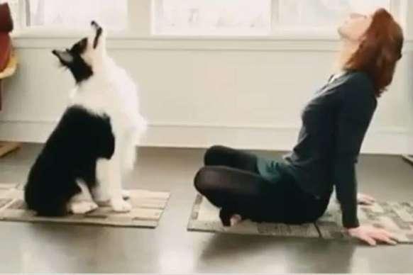 मालकिन के साथ कुत्ते ने किया योगा, वीडियो वायरल
