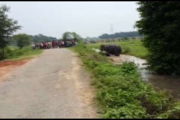 कांवर यात्रा के जुलुस में सनका हाथी, महावत की पटक-पटक कर ली जान