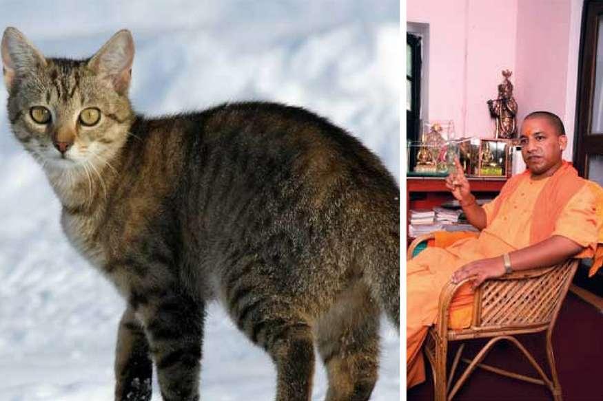 क्या योगी आदित्यनाथ की प्यारी बिल्ली भी आएगी सीएम हाउस, साथ में खाती है खाना