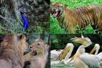 Delhi Zoo: National Zoological Park in Delhi