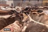 Watch: A Gau Rakshak From Gujarat Asks People to Avoid Violence in the Name of Cow Protection