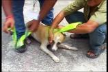 Watch: Reflective Collars For Street Dogs to Save Them From Accidents