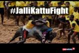 Watch: Youth, Professionals and Celebs Unite Over Jallikattu
