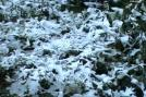 Plants covered in snow on the outskirts of Pathankot on Saturday, January 7, 2012. It's the first snowfall in Punjab in the recent past. (CNN-IBN)