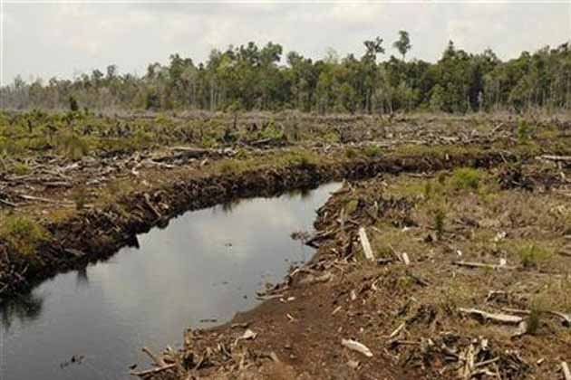 essays on deforestation in india Deforestation - causes, effects and solutions: deforestation in simple term means the felling and clearing of forest cover or tree plantations in order to accommodate agricultural, industrial or urban use.