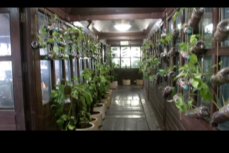 Delhi's green office creates it's own clean oxygen