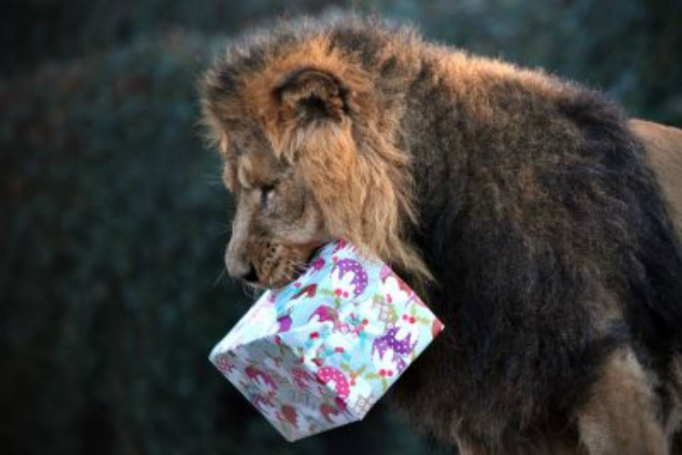 London Zoo offers 'room with a zoo', chance to sleep with lions