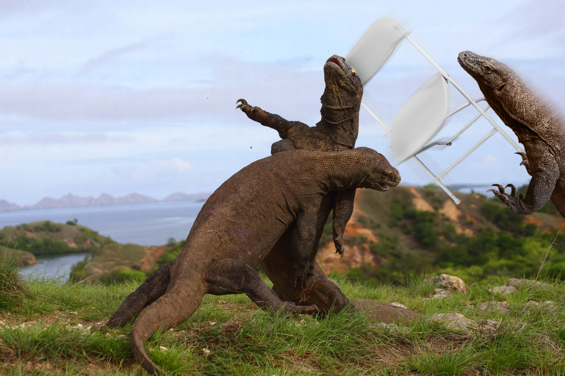 photo of 2 komodo dragons fighting gives way to hilarious